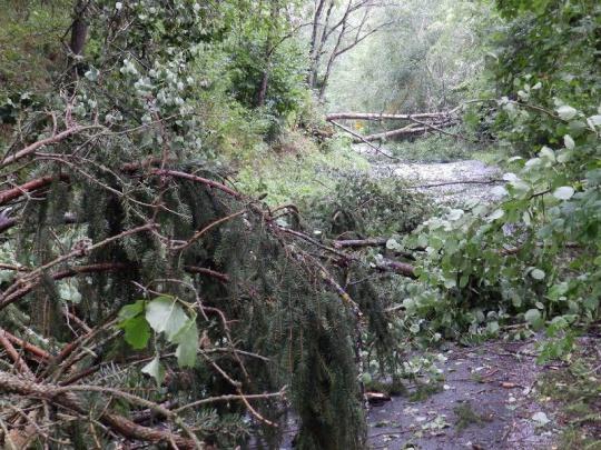 Vítr u Vojenských lesů poškodil sto tisíc metrů krychlových dříví