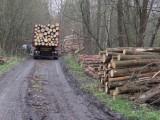 Moravskoslezští lesníci bojují s kůrovcem, odnášejí to silnice