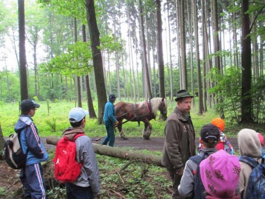 Anketa Lesnické práce: Jaký je přínos lesní pedagogiky?