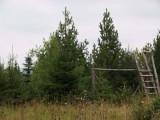 Vláda by se měla zabývat obnovou lesů v Krušných horách
