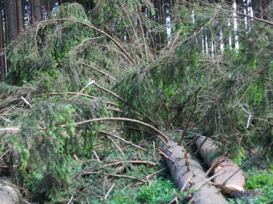 Nedělní vichřice způsobila v lesích škody menší než Sabine
