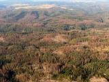 NKÚ řešil hospodaření národních parků, problémem bude pokles cen dříví