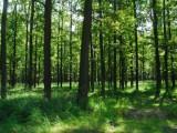Lesníci zkoumají, zda je možné sladit tradiční hospodaření s ekologickými požadavky