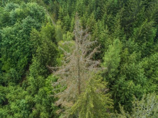 Na zmírnění loňských dopadů kalamity v nestátních lesích je potřeba 5,2 mld.