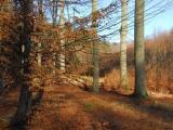 """Petici SVOL """"za zdravé lesy pro příští generace"""" podepsalo už 11 tisíc lidí"""