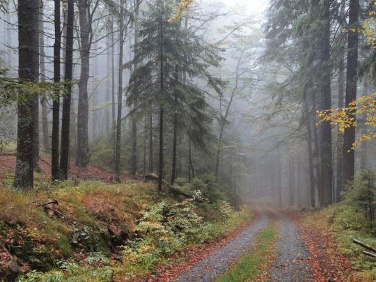 Úvahy osobností z lesnictví: Třicet let po sametové revoluci