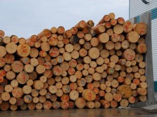 Pila Javořice zahájila investici za 400 milionů korun