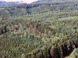 Sněmovna schválila novelu lesního zákona