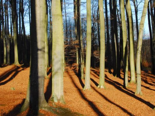 Nejvyšší představitelé PEFC jednali v Praze s českými lesníky