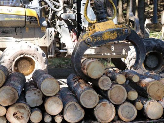 Rok 2019: Rekordní těžba, extrémní propad ceny dřeva, tisíce hektarů vysazených lesů