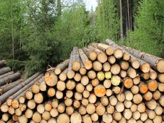 Vláda navýšila kompenzace za pokles ceny dřeva na 2,8 miliardy Kč