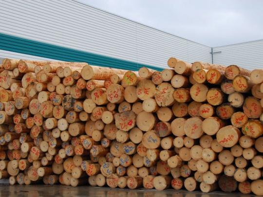 Vláda nevydala stanovisko k založení Lesnického a dřevařského fondu