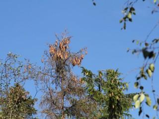 V lesích na Vysočině jsou kvůli suchu poškozeny stromy i sazenice