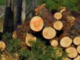 LČR za leden až únor vykázaly zisk 1,06 mld. korun