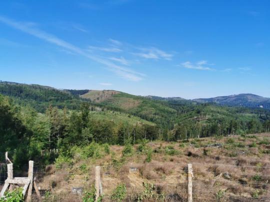 MZe publikovalo aktuální stanoviska týkající se ochrany a obnovy lesa po kalamitě