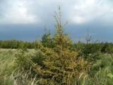 Půdy v lesích s chřadnoucím smrkem postrádají důležité živiny