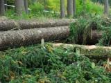 Z náhradního tendru chybí Lesům ČR uzavřít tři smlouvy