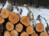 Lesy ČR zveřejnily Strategii rozvoje 2019-2024, z jednání vlády byla stažena
