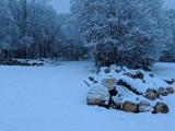 Vláda schválila novelu, která má zrychlit výkon správy lesů