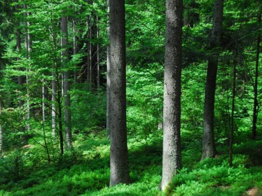 Konkurenceschopnost lesnictví a jeho význam pro společnost řešila celostátní konference SVOL