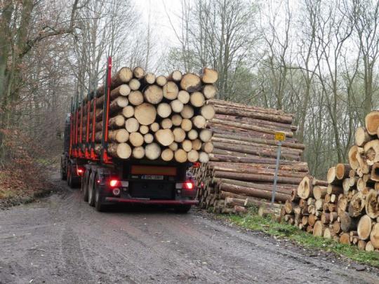 Obce na severní Moravě chtějí řešit škody na cestách poničených dopravou dříví