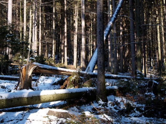 Orkán Sabine poničil v ČR přes milion kubíků dřeva, nejhorší situace je na Šumavě