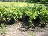 Druhý rok po sobě roste plocha zalesněná listnáči