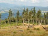 Třetina emisí olova v lesích pochází z odpalování ohňostrojů a pyrotechniky