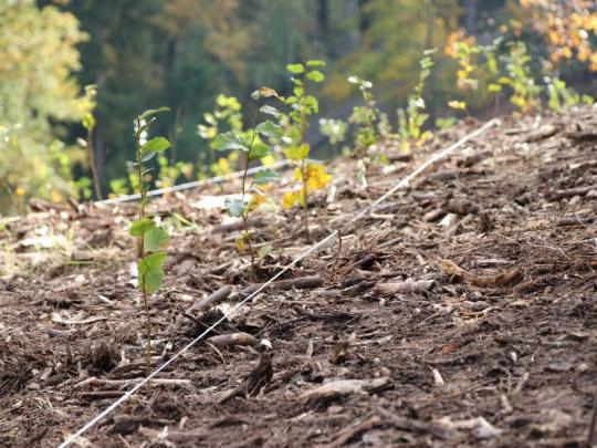 Národní plán obnovy by měl významně podpořit obnovu lesů