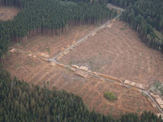 MZe: Peníze na lesnické investice jsme snížili po debatě s ministerstvy