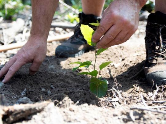 Lesy ČR zahajují Dny za obnovu lesa: 200 akcí po celé republice