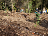 V sobotu proběhne další Den za obnovu lesa – v jeden den na třinácti místech v zemi