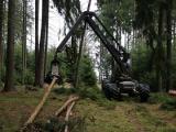 V tendru Lesů ČR 2022+ půjde o zakázky za pět miliard korun