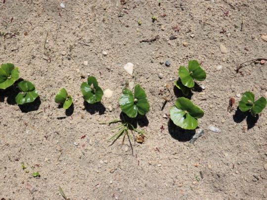V roce 2022 bude obnovena možnost podání žádosti na zalesnění zemědělské půdy